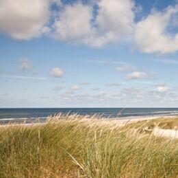 Billede af strand og klitter