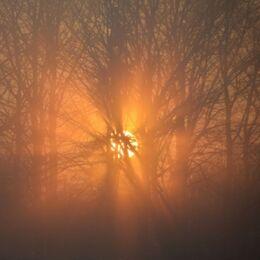 Billede af tågedis